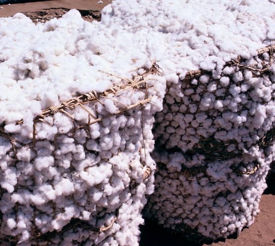 baskets of cotton